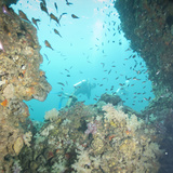 Scuba Diving, Southern Thailand, Andaman Sea, Indian Ocean, Southeast Asia, Asia Photographic Print by Andrew Stewart