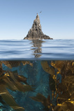 Underwater Photo of Anacapa and Kelp, Channel Islands National Park, California, USA Photographic Print by Antonio Busiello