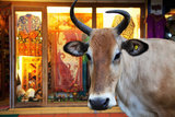Cow Outside a Shop in the Street in Thekkady, Kerala, India, Asia Photographic Print by Martin Child
