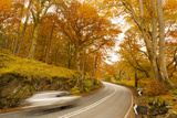 Car Speeding Through Autumn Forest Road, Lake District National Park, Cumbria, England, UK Photographic Print by Ian Egner