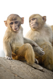 Monkeys at Pashupatinath Temple, Kathmandu, Nepal, Asia Photographic Print by Ben Pipe