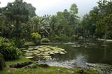 Jardim Botanico (Botanical Gardens), Rio de Janeiro, Brazil, South America Photographic Print by Yadid Levy