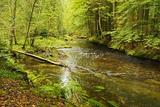 Grosser Regen (River), Near Bayerisch Eisenstein, Bavarian Forest, Bavaria, Germany, Europe Photographic Print by Jochen Schlenker