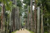 Jardim Botanico (Botanical Gardens), Rio de Janeiro, Brazil, South America Photographie par Yadid Levy