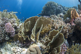Tropical Coral Reef Scene in Natural Lighting, Ras Mohammed Nat'l Pk, Off Sharm El Sheikh, Egypt Photographic Print by Mark Doherty