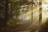 Morning Fog in Forest, Donautal (Danube Valley), Near Beuron, Baden-Wurttemberg, Germany, Europe Reproduction photographique par Jochen Schlenker