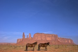 Two Navajo Horses, Monument Valley Navajo Tribal Park, Utah, United States of America Photographic Print by Peter Barritt