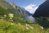 Wildflower Meadow Overlooking Naeroyfjorden, Sogn Og Fjordane, UNESCO World Heritage Site, Norway Photographic Print by Gary Cook