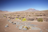 Landscape of Altiplano, Potosi Department, Bolivia, South America Photographic Print by Ian Trower