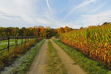 Rural Autumn Scene, Near Villingen-Schwenningen, Baden-Wurttemberg, Germany, Europe Photographic Print by Jochen Schlenker