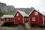 Summer Cabins at Reine, Lofoten Islands, Norway, Scandinavia, Europe Photographic Print by David Lomax