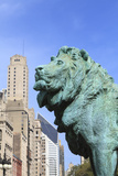One of Two Iconic Bronze Lion Statues Outside the Art Institute of Chicago, Chicago, Illinois, USA Photographic Print by Amanda Hall