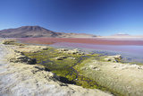 Laguna Colorada on the Altiplano, Potosi Department, Bolivia, South America Photographic Print by Ian Trower