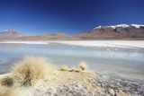 Laguna Adeyonda on Altiplano, Potosi Department, Bolivia, South America Photographic Print by Ian Trower