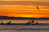 Sunrise, Isla Rasa, Gulf of California (Sea of Cortez), Baja California, Mexico, North America Photographic Print by Michael Nolan