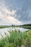 Bullrushes on Bank and Still Waters of River Mark, Breda, North Brabant, The Netherlands (Holland) Photographic Print by Mark Doherty