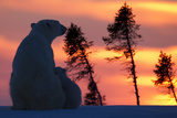 Polar Bear (Ursus Maritimus) and Cub, Wapusk National Park, Churchill, Hudson Bay, Manitoba, Canada Fotografisk trykk av David Jenkins