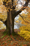 Autumn Trees by Ullswater Near Glenridding, Lake District National Park, Cumbria, England, UK Photographic Print by Mark Sunderland
