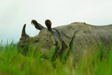 One Horned Rhinoceros in Kaziranga National Park, Assam, India, Asia Photographic Print by Bhaskar Krishnamurthy