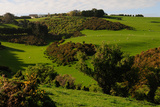 Rolling Plains of Otago Peninsula, South Island, New Zealand, Pacific Photographic Print by Bhaskar Krishnamurthy