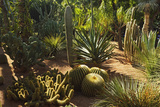 The Majorelle Gardens, Marrakesh, Morocco, North Africa, Africa Photographic Print by Jochen Schlenker