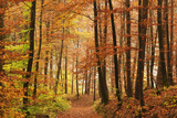 Autumn Forest in the Neckar Valley, Near Villingen-Schwenningen, Baden-Wurttemberg, Germany, Europe Photographic Print by Jochen Schlenker