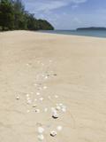 Seashells on Bamboo Island, Sihanoukville, Cambodia, Indochina, Southeast Asia, Asia Photographic Print by Charlie Harding