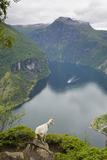 Goats Overlooking Geirangerfjorden, Near Geiranger, UNESCO Site, More Og Romsdal, Norway Fotografisk tryk af Gary Cook