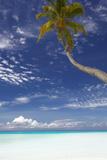 Palm Tree Overhanging Beach, Maldives, Indian Ocean, Asia Reproduction photographique par Sakis Papadopoulos