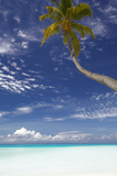 Palm Tree Overhanging Beach, Maldives, Indian Ocean, Asia Photographic Print by Sakis Papadopoulos