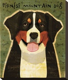 Bernese Mountain Dog Stretched Canvas Print by John W. Golden