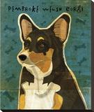 Pembroke Welsh Corgi (Tri-Color) Stretched Canvas Print by John Golden