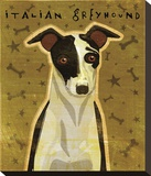 Italian Greyhound (Black & White) Stretched Canvas Print by John W. Golden