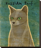 Russian Blue Stretched Canvas Print by John Golden