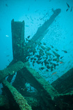 Wreck Diving, Southern Thailand, Andaman Sea, Indian Ocean, Southeast Asia, Asia Reprodukcja zdjęcia autor Andrew Stewart