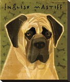 English Mastiff Stretched Canvas Print by John Golden
