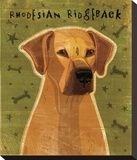 Rhodesian Ridgeback Stretched Canvas Print by John Golden