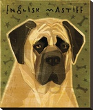 English Mastiff Stretched Canvas Print by John W. Golden