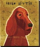 Irish Setter Stretched Canvas Print by John W. Golden