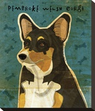 Pembroke Welsh Corgi (Tri-Color) Stretched Canvas Print by John Golden