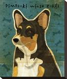 Pembroke Welsh Corgi (Tri-Color) Stretched Canvas Print by John W. Golden