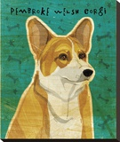 Pembroke Welsh Corgi Stretched Canvas Print by John Golden