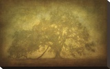 St. Joe Plantation Oak in Fog 3 Stretched Canvas Print by Guion William