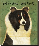 Shetland Sheepdog (Tri-Color) Stretched Canvas Print by John Golden