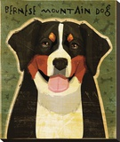 Bernese Mountain Dog Stretched Canvas Print by John Golden