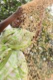 Sieving Grains in Rural India, Trissur, Tamil Nadu, India, Asia Photographic Print by Bhaskar Krishnamurthy