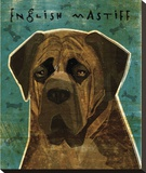 English Mastiff (Brindle) Stretched Canvas Print by John W. Golden