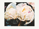 Peonies Posters by Claude Guibert