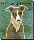 Italian Greyhound (White & Grey) Stretched Canvas Print by John Golden