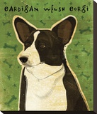 Cardigan Welsh Corgi Stretched Canvas Print by John W. Golden